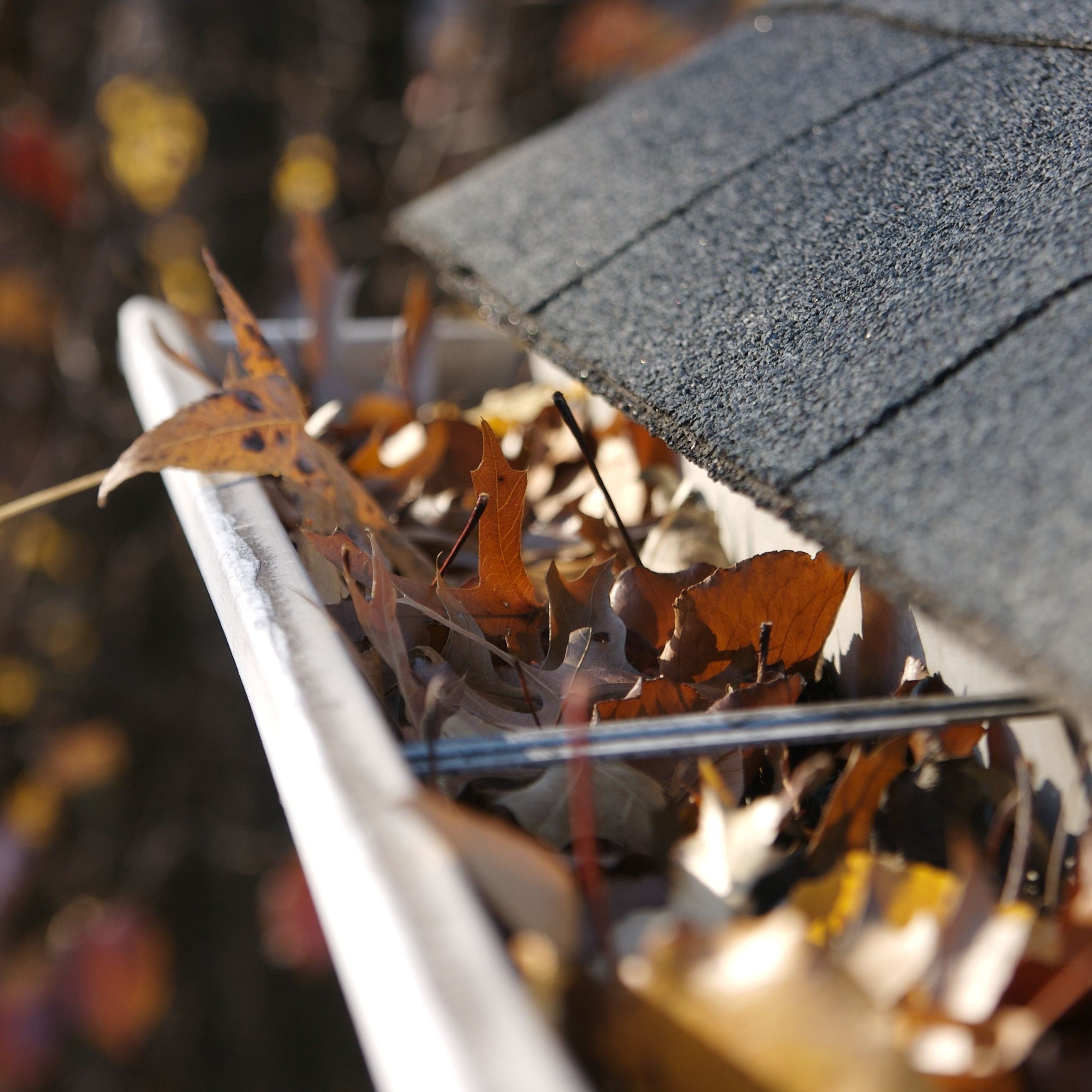 A close up of a gutter than needs to be cleaned out.